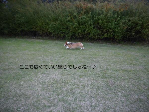 P1030472_convert_20131128131405.jpg
