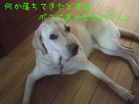 006_20120818160748.jpg