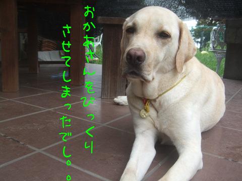 007_20120818161055.jpg