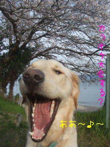 010_20120418201110.jpg