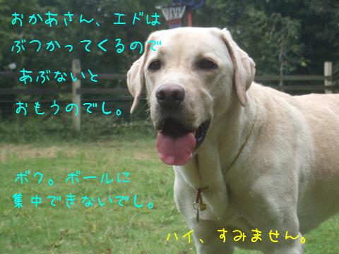014_20121005154248.jpg