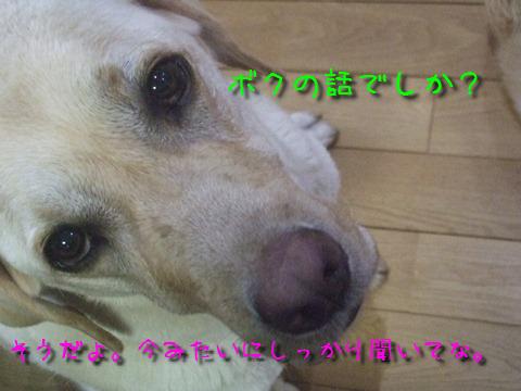 015_20120724130347.jpg