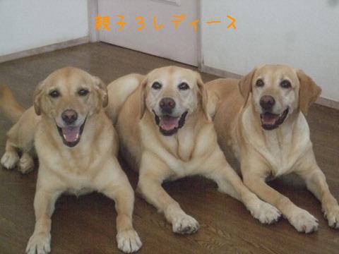 024_20120824140351.jpg