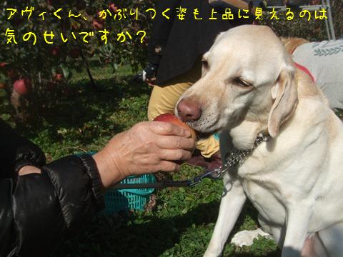 070_20121124150843.jpg