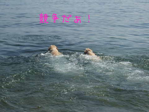 2010_09275gatu0022_20120429114613.jpg