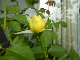 Honey Bouquet