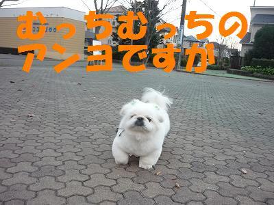 s-006.jpg