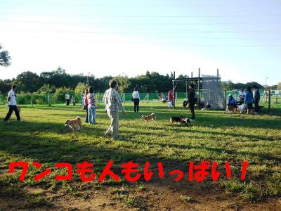 taro+006_convert_20101011191748.jpg