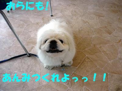 taro100706_convert_20100706193452.jpg