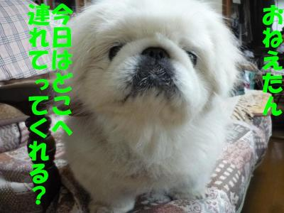 taro100953_convert_20100923130554.jpg