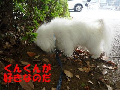 taro101024_convert_20101017190436.jpg