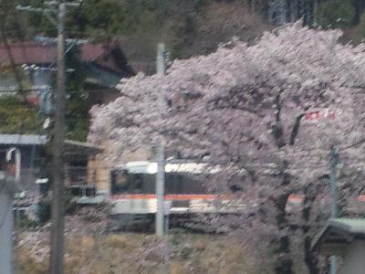 桜と特急ワイドビュー伊那路