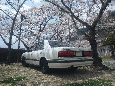 マツダHCルーチェと'11の桜