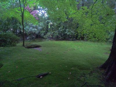 竹林の中にあったコケの庭