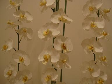 シルクフラワーの巨大胡蝶蘭。
