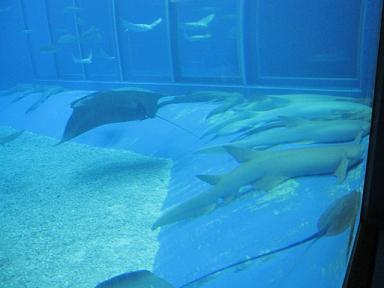 鮫がだらけてるのが面白かった!