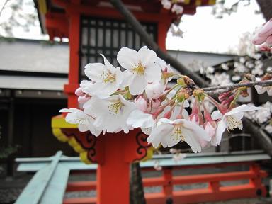 桜も咲いてました(≧▽≦)♪