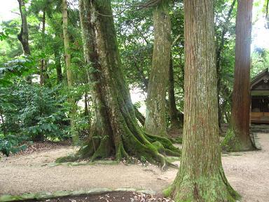 境内の木々。