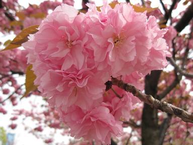 可愛いピンク!