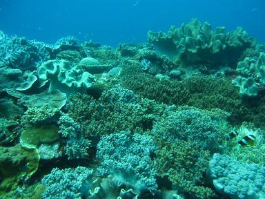 珊瑚の楽園だ~♪