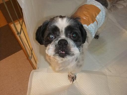 2011_1124保護犬0073