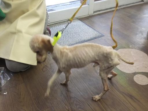 2011_1219保護犬0134