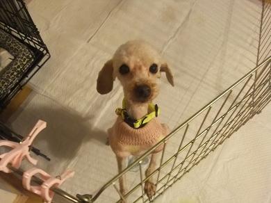 2011_1219保護犬0141