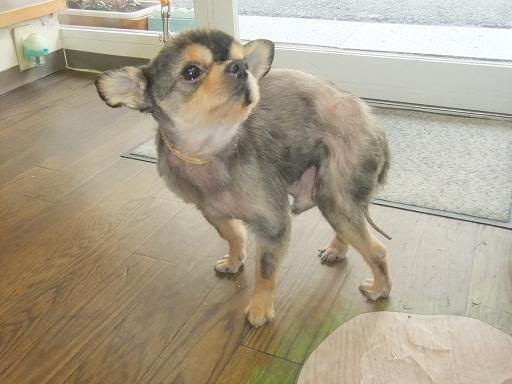 2012_0112保護犬0028
