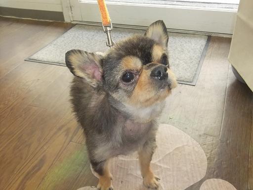 2012_0112保護犬0031