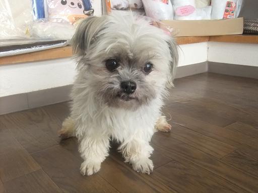 2012_0203保護犬0018