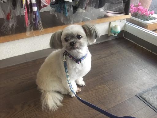 2012_0203保護犬0028