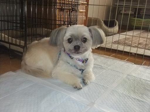 2012_0203保護犬0064