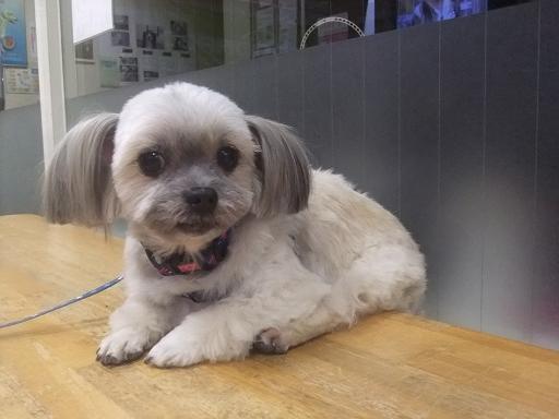 2012_0203保護犬0069