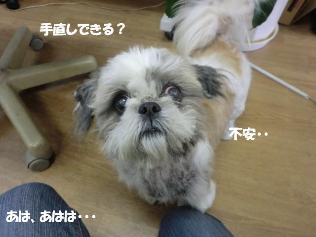 CIMG0573_20111216132348.jpg