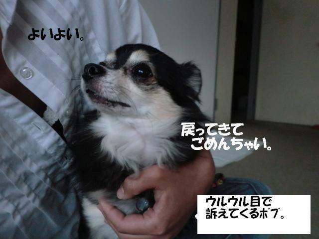 CIMG9961_20111108143353.jpg