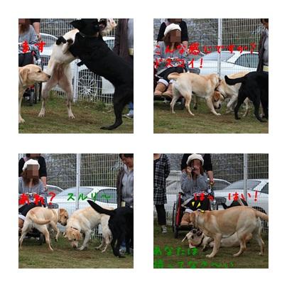4_20111110100135.jpg