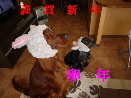ウサギどし