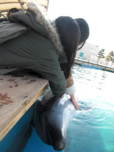 イルカにタッチ