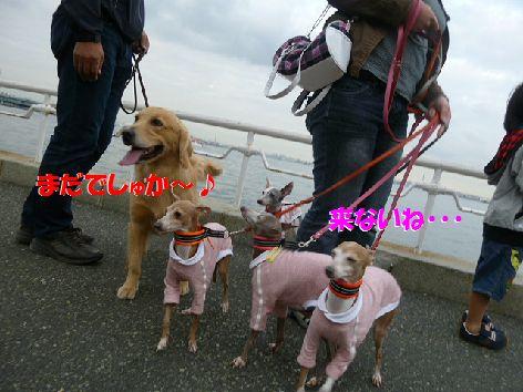 a_20111116064654.jpg