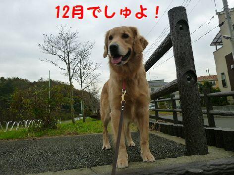 a_20111201072020.jpg