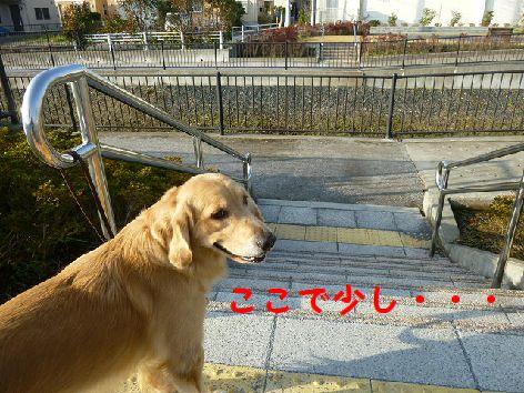 a_20111208071921.jpg