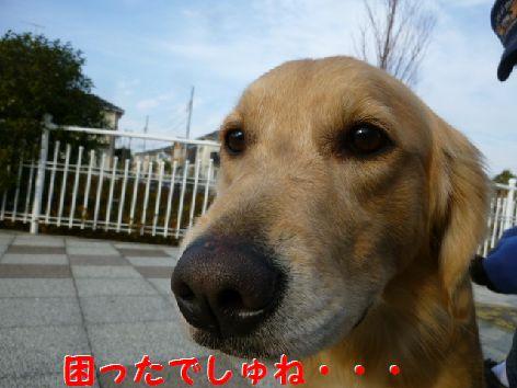 a_20120103105128.jpg