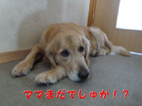 a_20120111070522.jpg