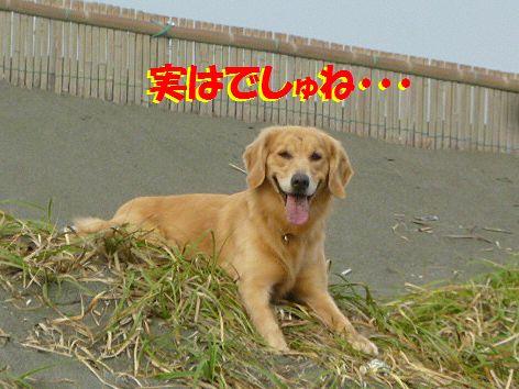 b1_20111111065013.jpg