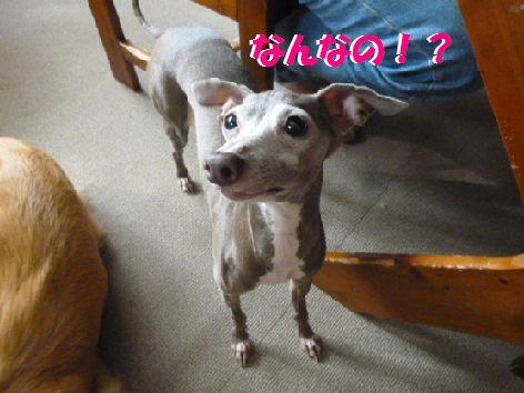 b_20111103100729.jpg