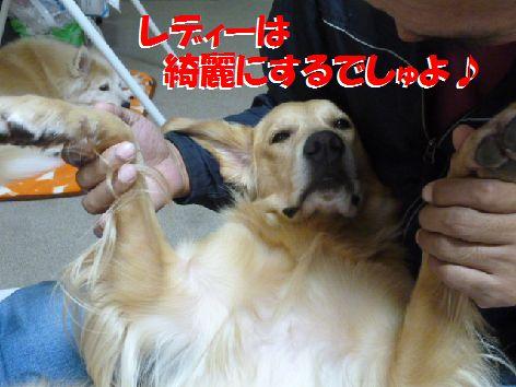 b_20111104065927.jpg