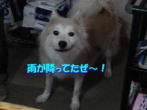 b_20111120093743.jpg