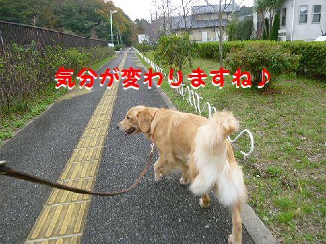 b_20111201072020.jpg