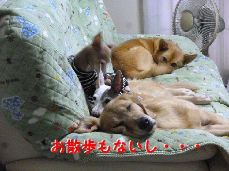 b_20111202070017.jpg