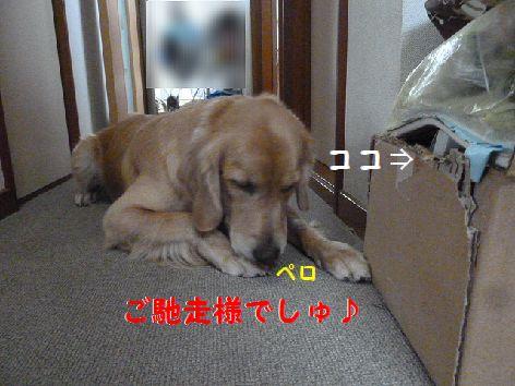 b_20111204101226.jpg
